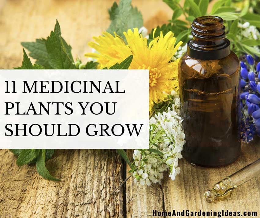 11 Medicinal Plants You Should Grow
