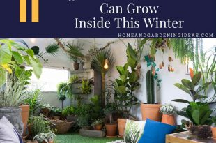 Vegetables and Herbs You Can Grow Inside This Winter