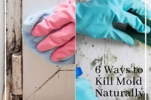 6 Ways to Kill Mold Naturally