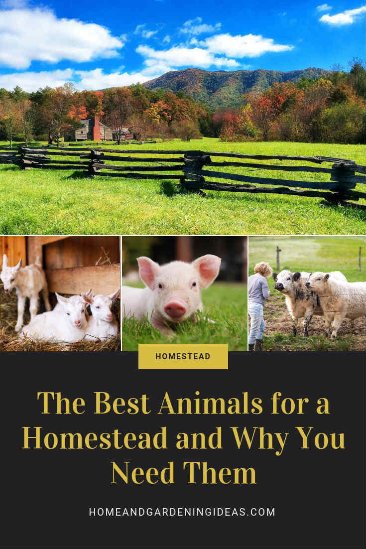 Animals Homestead