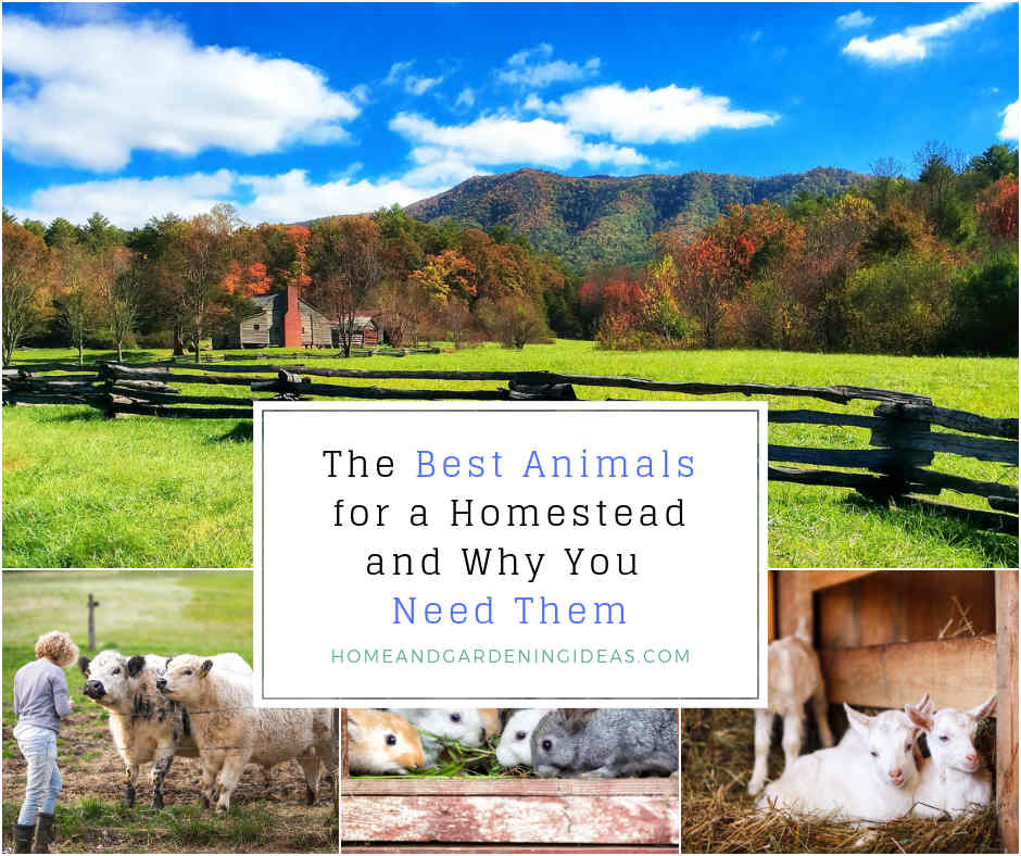 The Best Animals for a Homestead