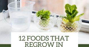 Foods that Regrow in Water