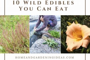 10 Wild Edibles You Can Eat