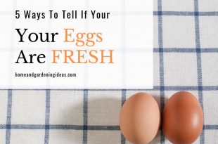 5 Ways To Tell If Your Eggs are Fresh