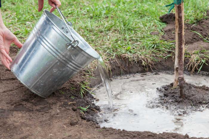 Water and Add Mulch