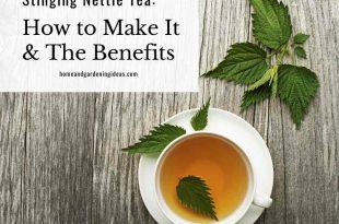 Stinging Nettle Tea