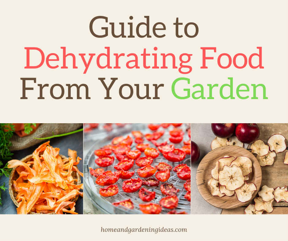 Guide to Dehydrating Food From Your Garden