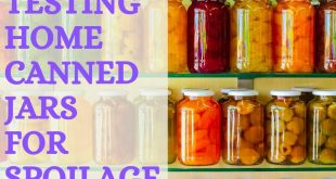 Testing Home Canned Jars for Spoilage
