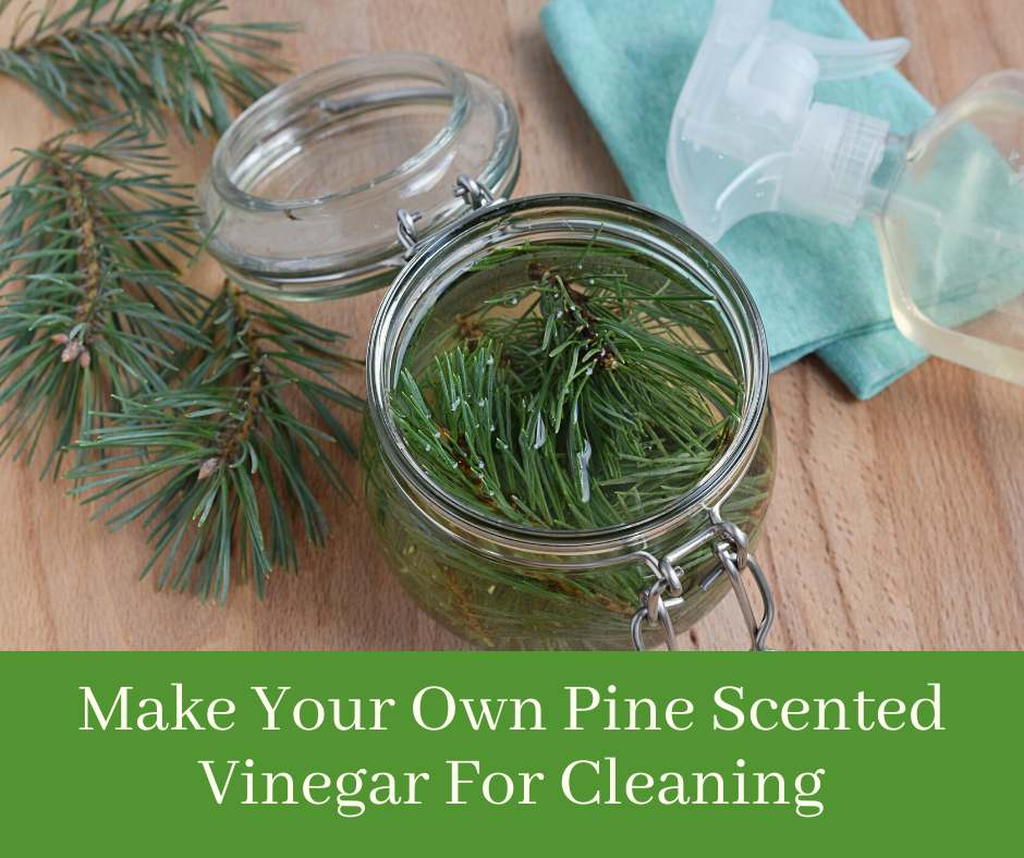 Make Your Own Pine Scented Vinegar For Cleaning
