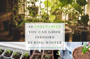 Vegetables You Can Grow Indoors During Winter